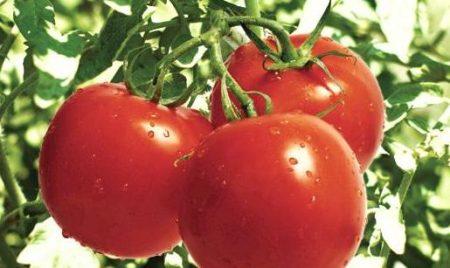 صور طماطم رمزيات و خلفيات طماطم بانواعها (3)
